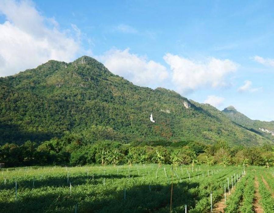 Organic Farm Kao Yai Thailand